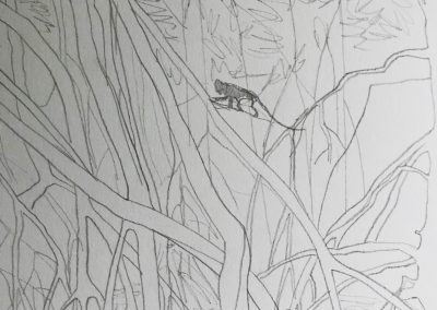 Monkey Mangroves drawing II