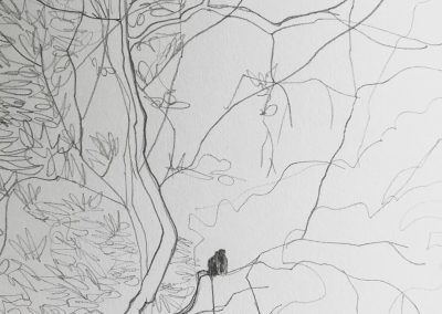 Monkey Mangroves drawing