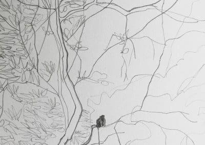 Monkey Mangroves drawing