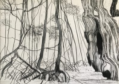 Mangroves Mountains drawing by Claire Cansick